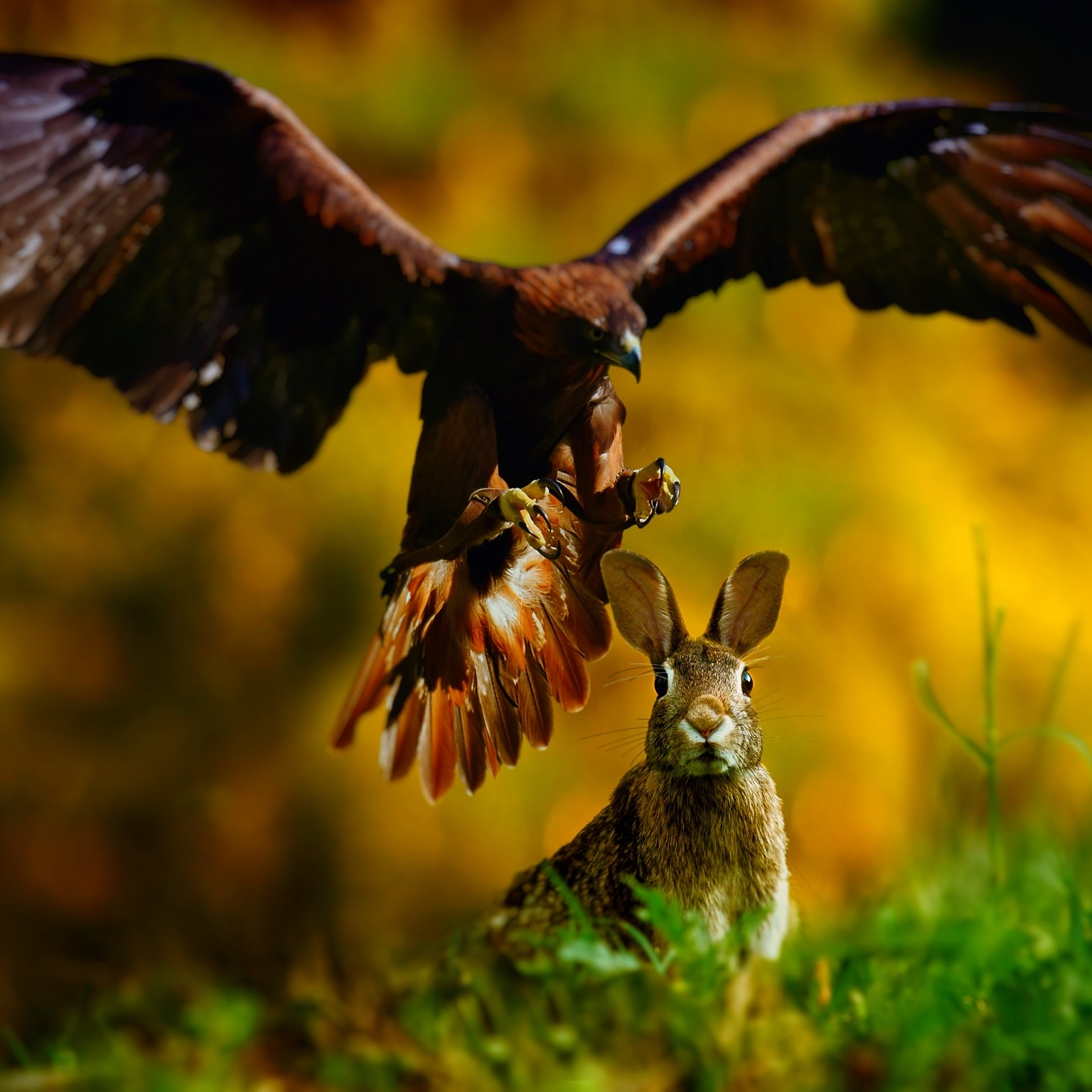 eagle-and-rabbit.jpg