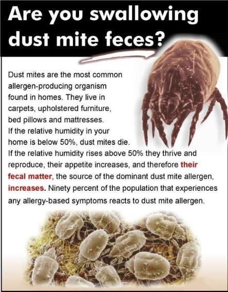dustmite feces.jpg