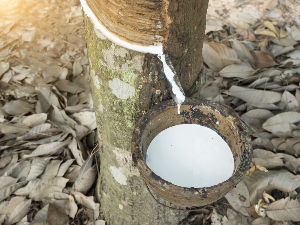 A natural latex mattress is made using the hand collected pure extract from rubber trees.