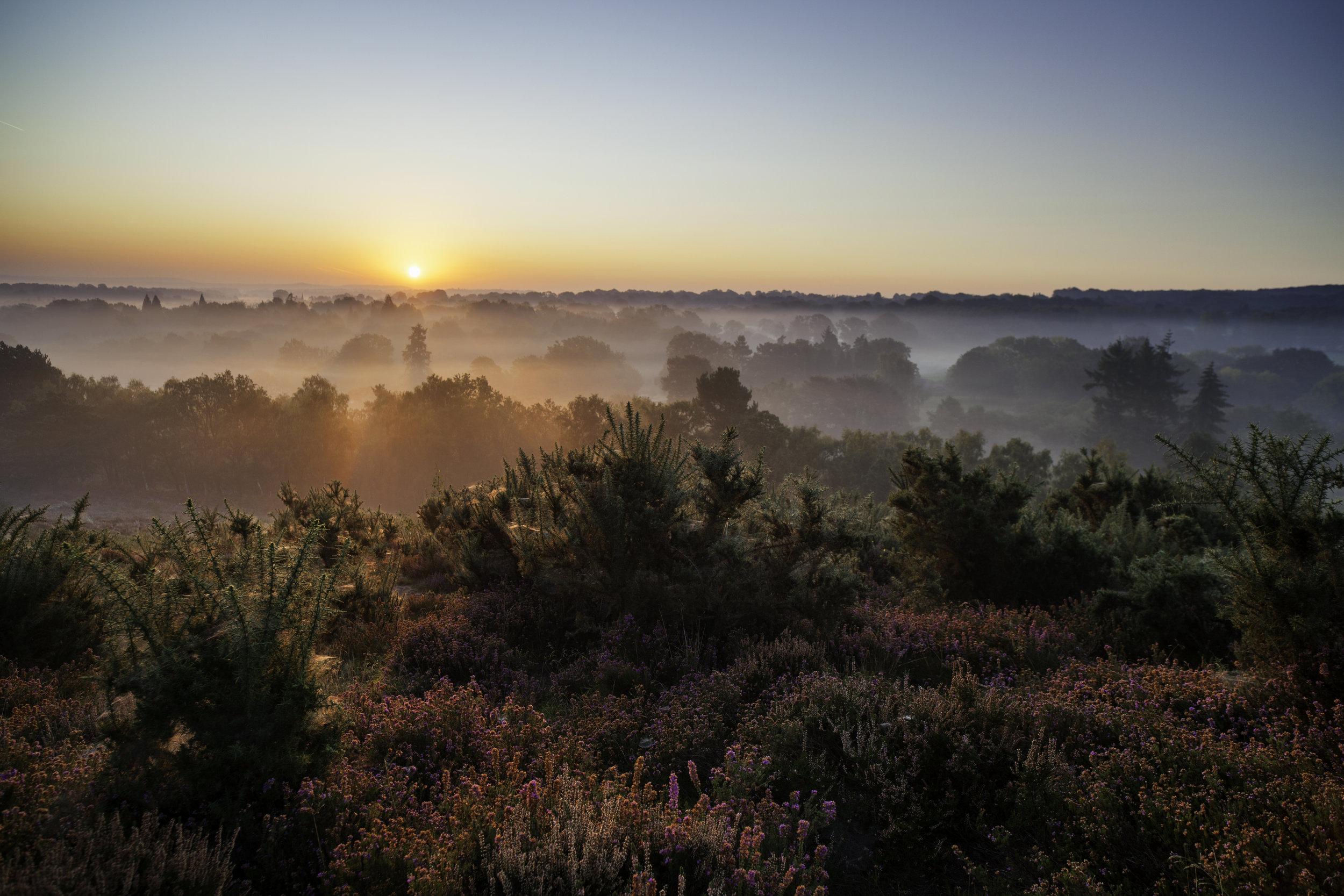 Surrey Hills, Image: iStock/simonbradfield