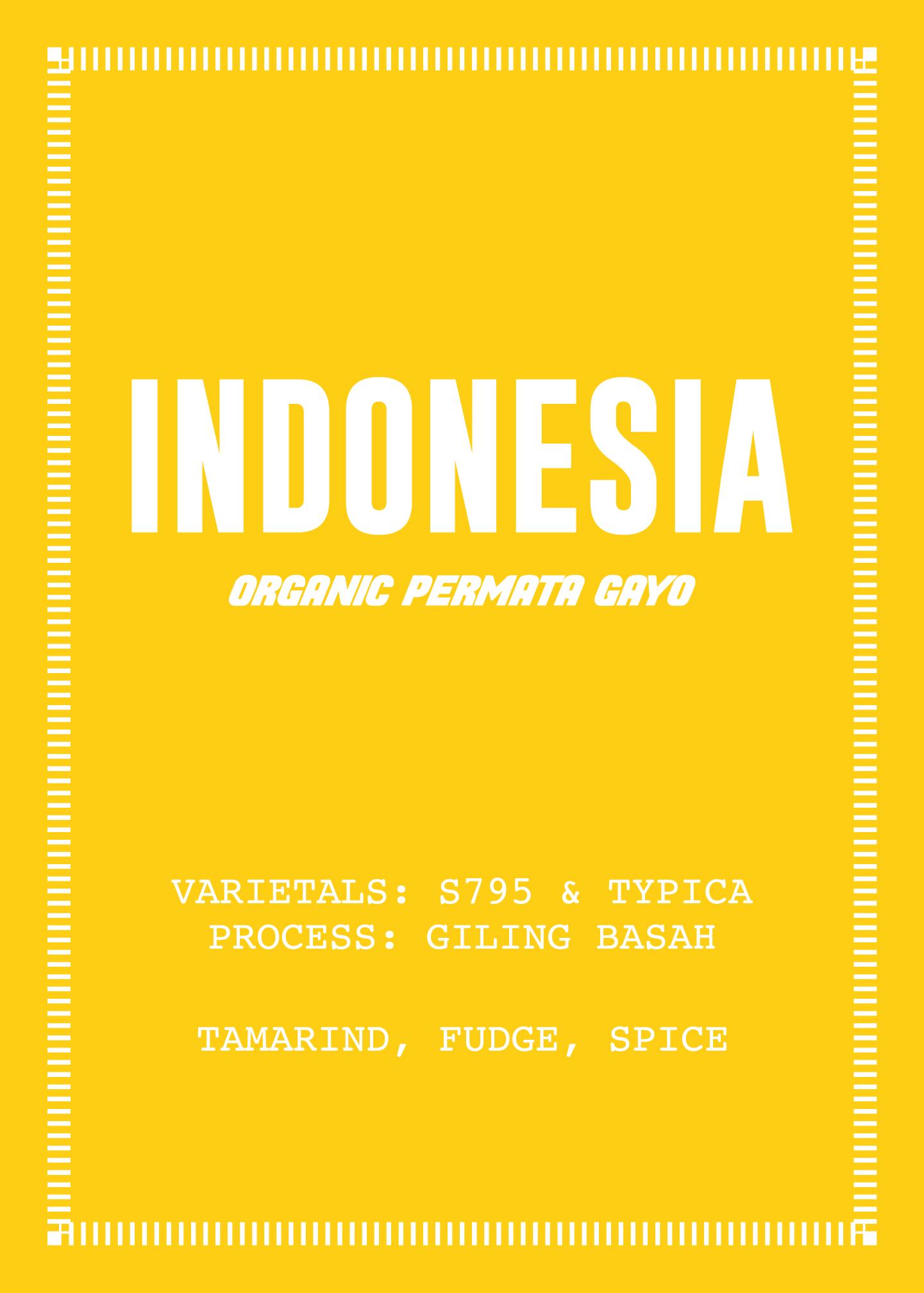 indo-v3-web.png