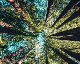 tree_c.jpg