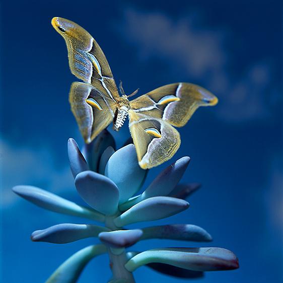 46_1Laura_Farrell_Flora_and_Fauna_Mothra.jpg