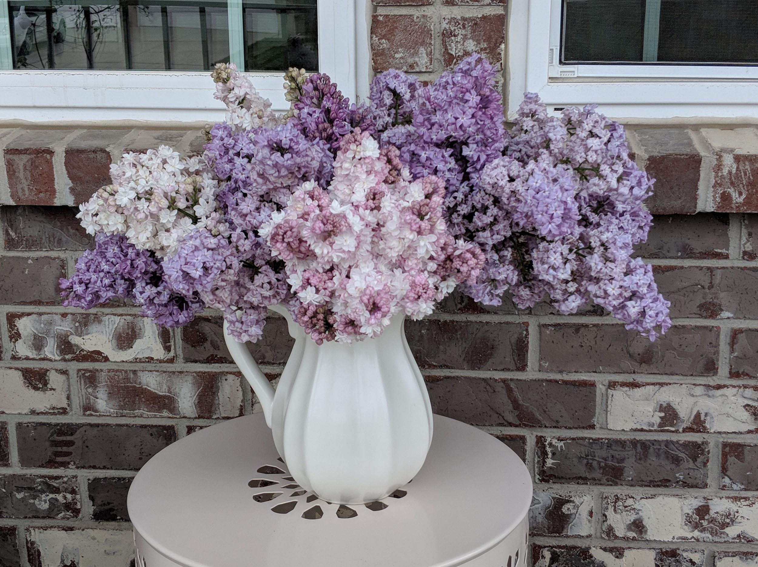 Spring lilacs in a classic white pitcher.