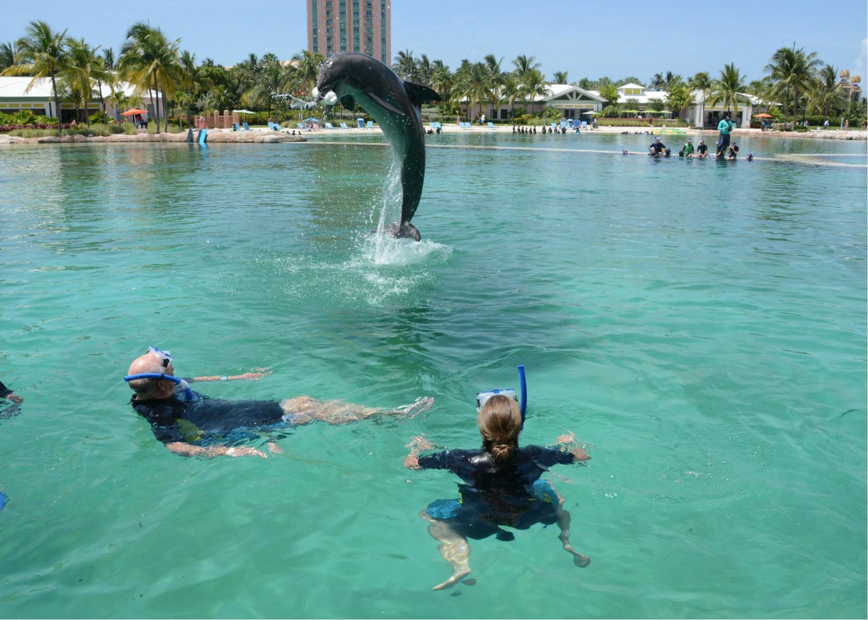 dad dolphin fetch.jpg