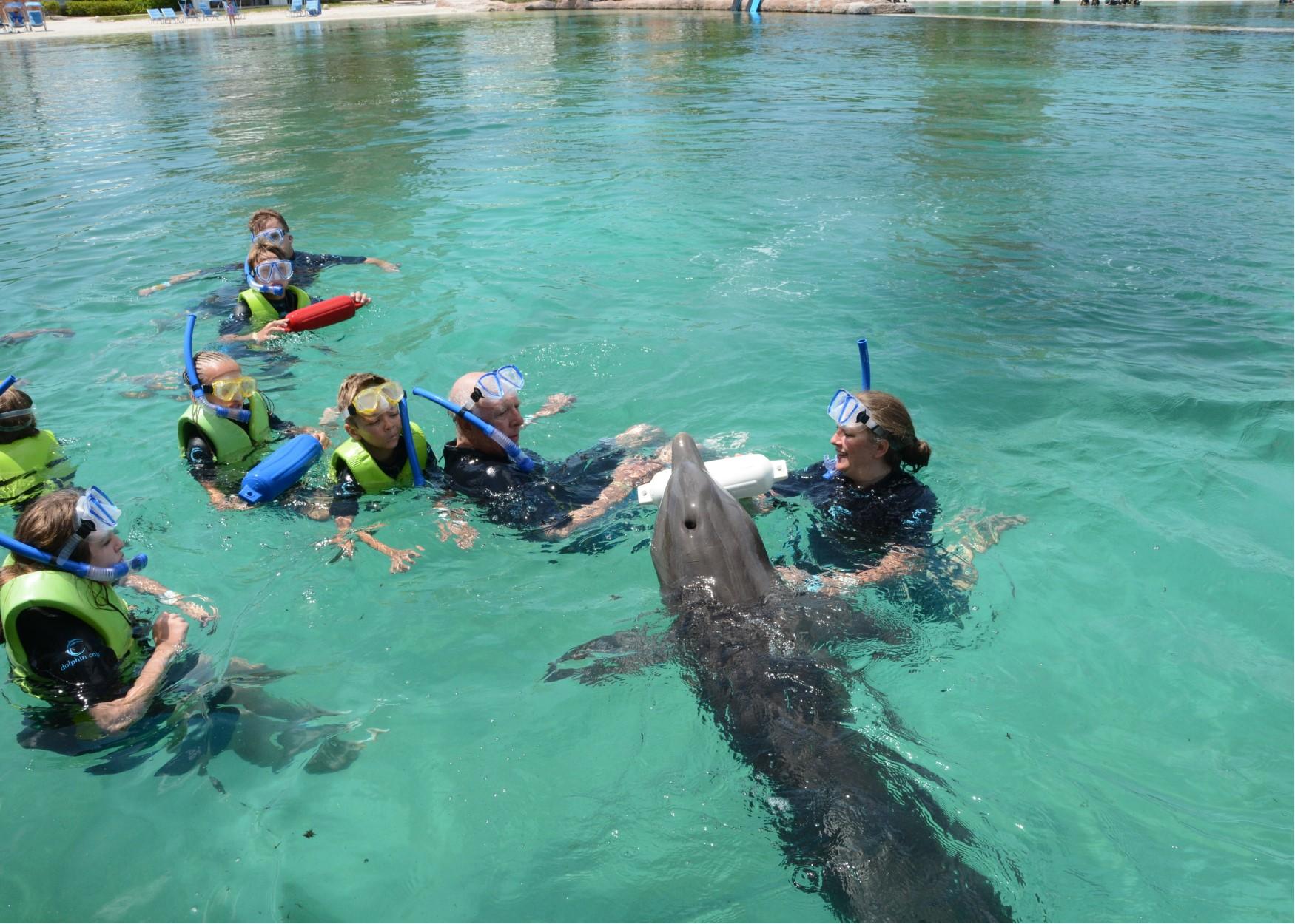 hill dolphin play.jpg