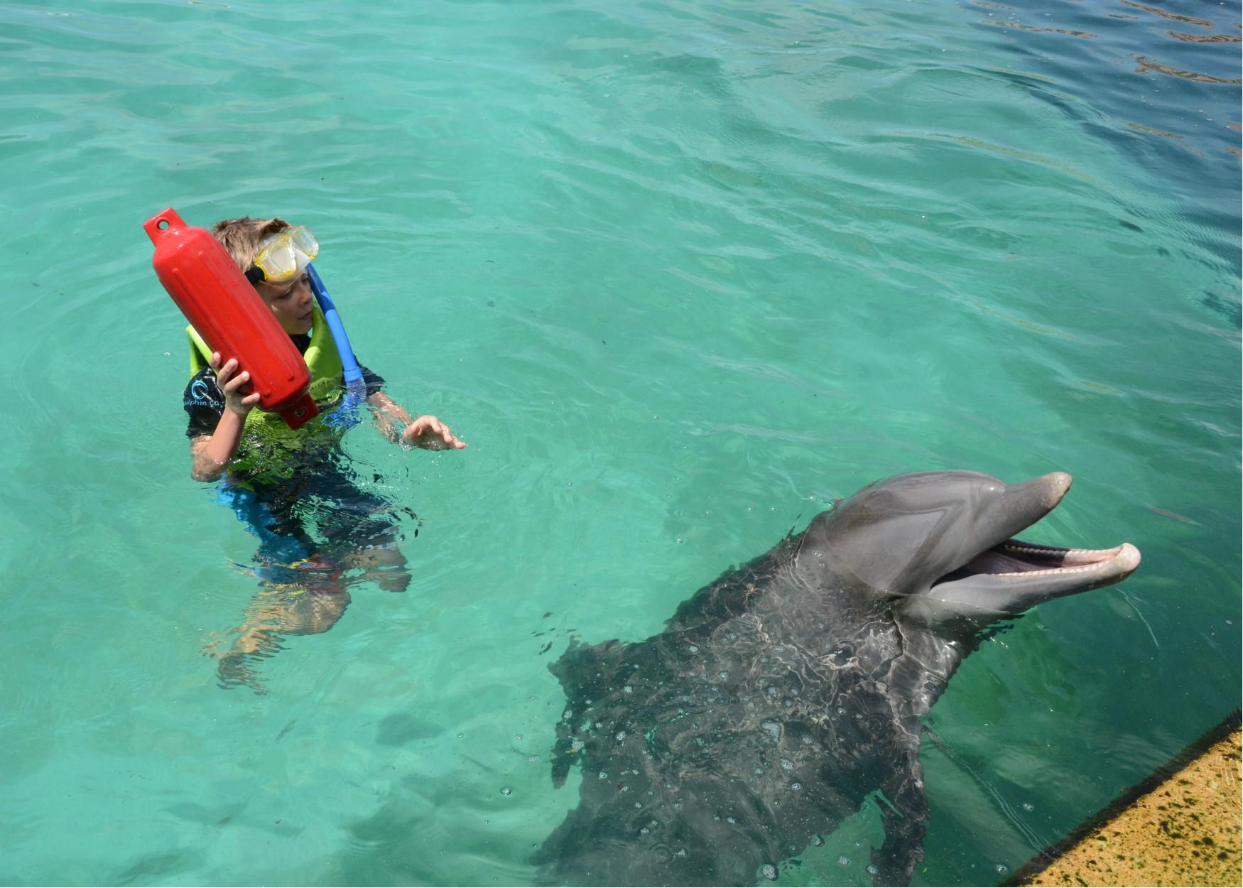 jake dolphin fetch.jpg