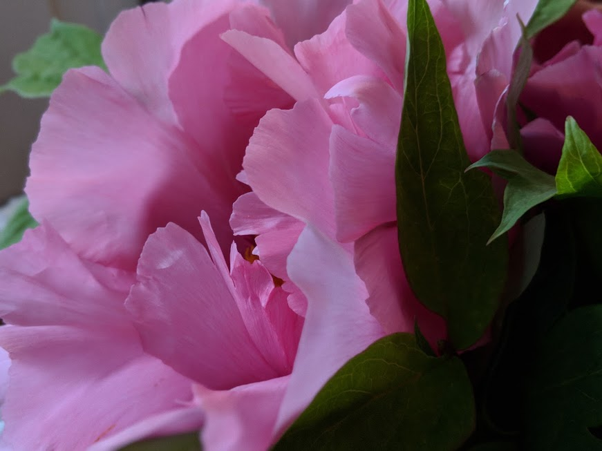 peachy pink flower.jpg