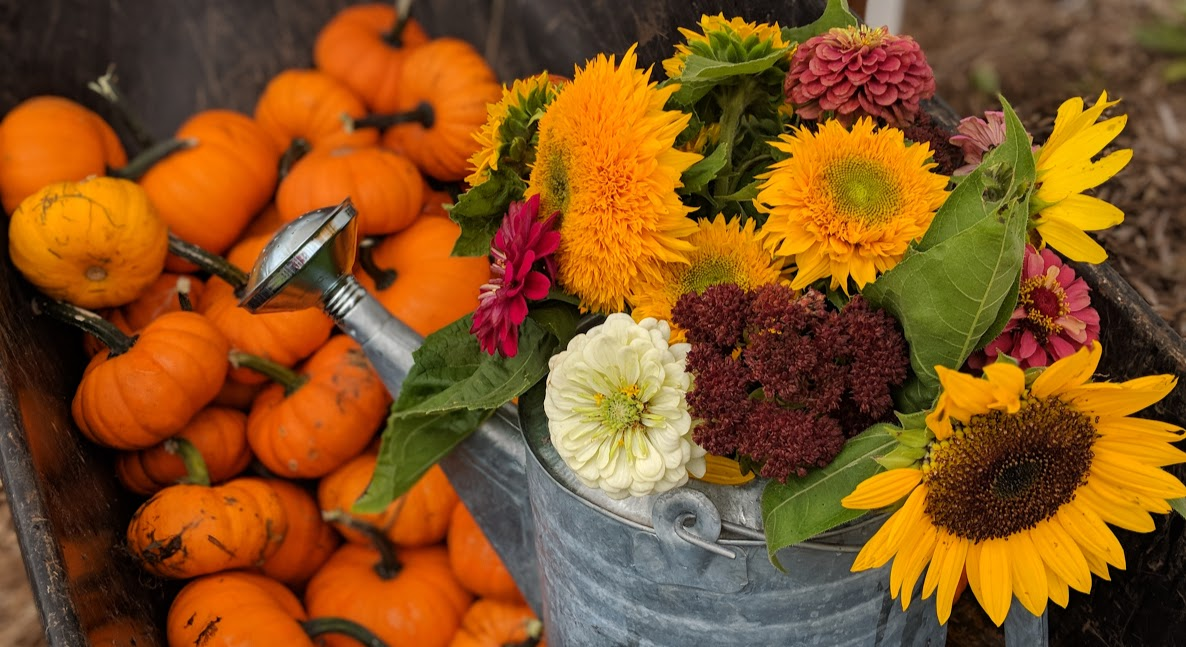 fall flowers and pumpkins.jpg