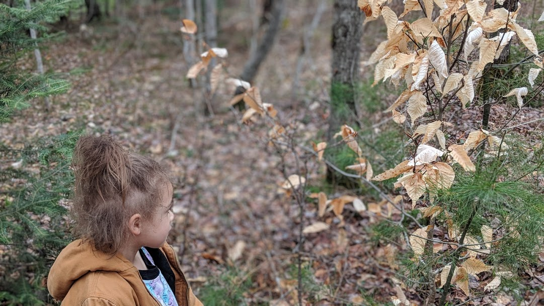 """Naomi saw these leaves and kept saying, """"Look Mommy, look at this."""" Am glad she already sees the perfect, mundane magic all around us, all the time."""