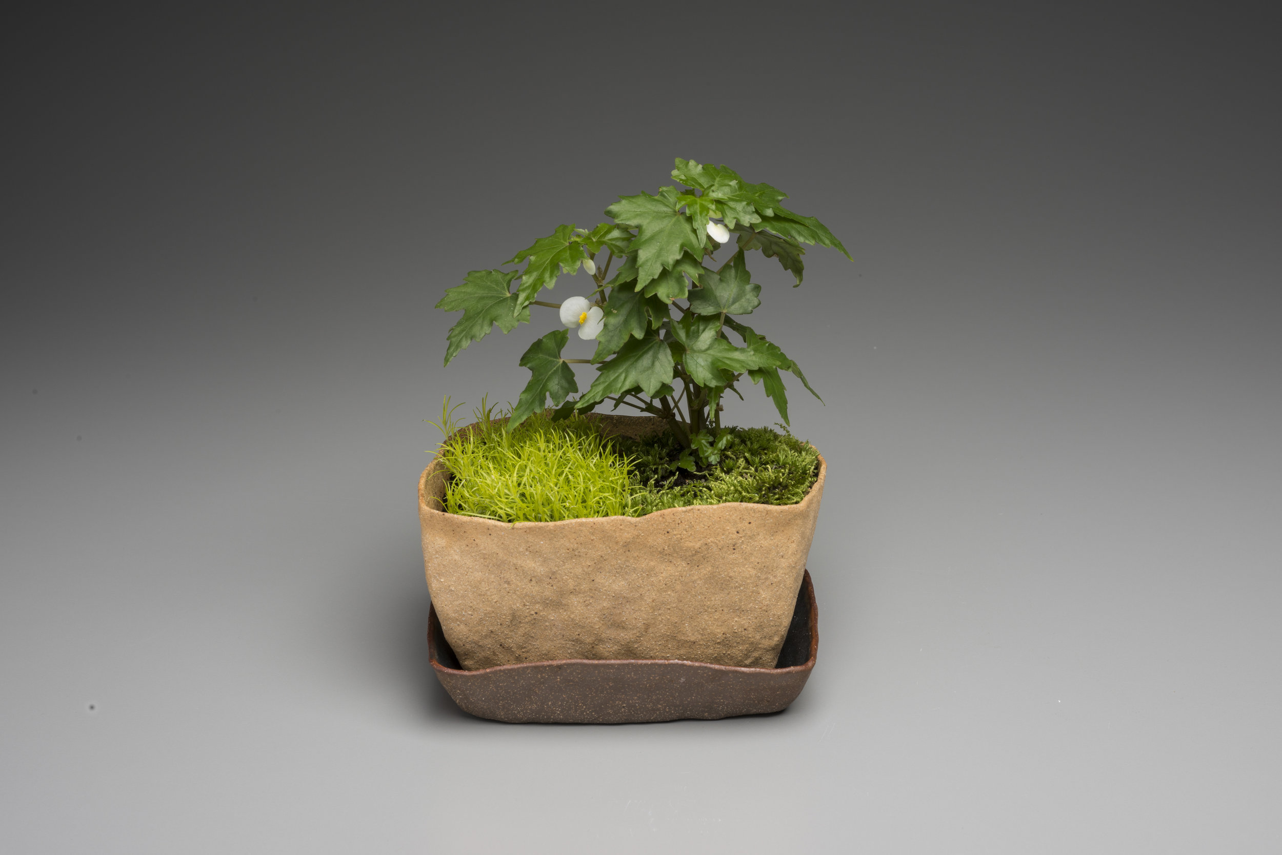Miniature Garden 1.jpg