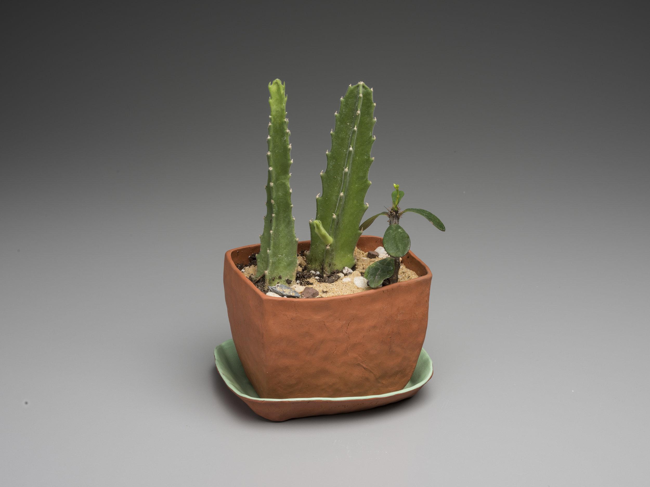 Miniature Garden 7.jpg