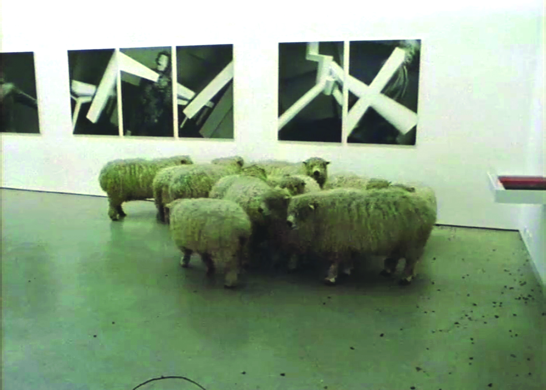 Christian Jankowski,  Flock , 2002;DVD, 10 minutes;courtesy of the artist, Maccarone, Inc., New York, and Klosterfelde, Berlin