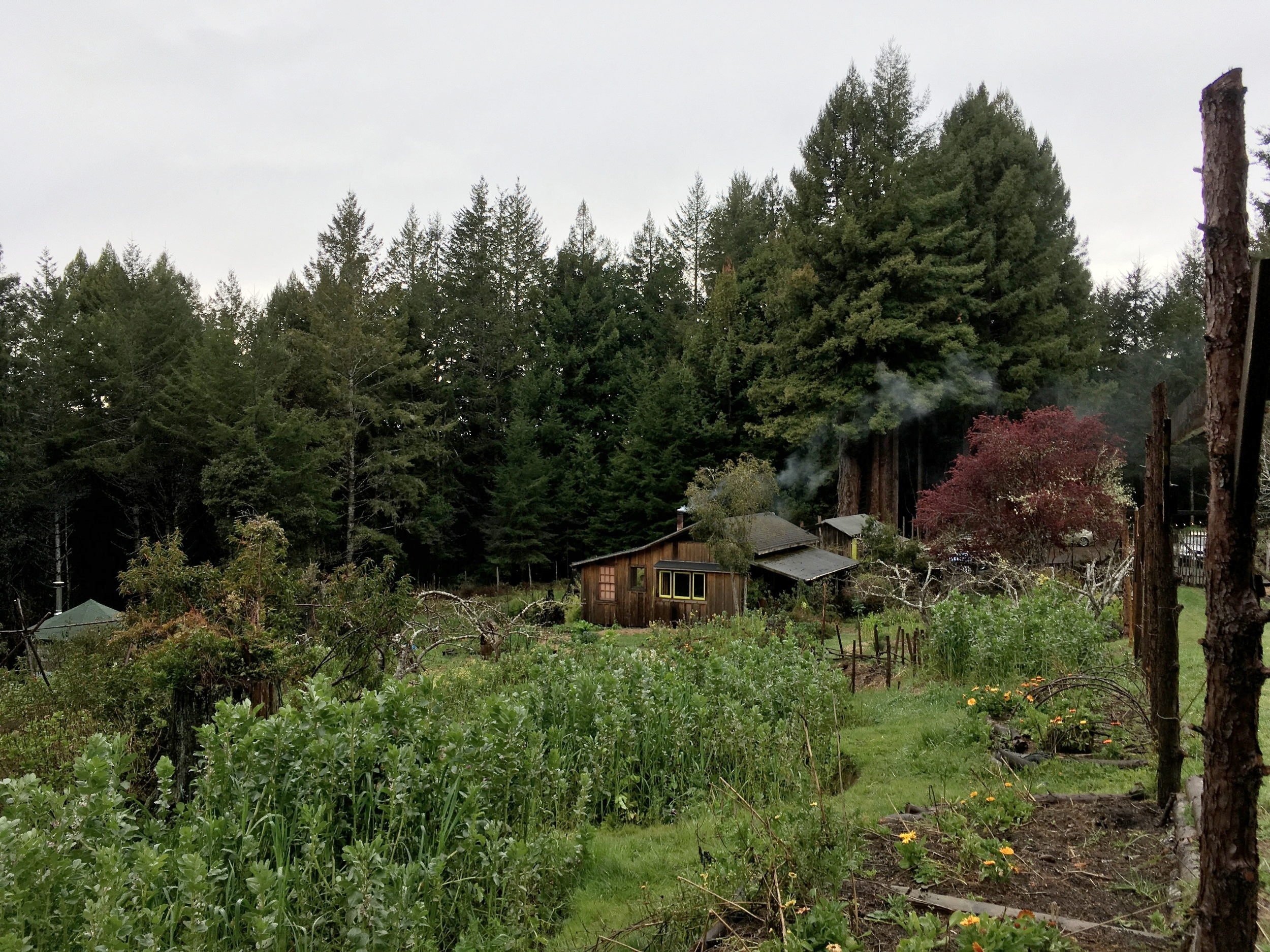 View of Orchard Cabin, Salmon Creek Farm, February 2018.