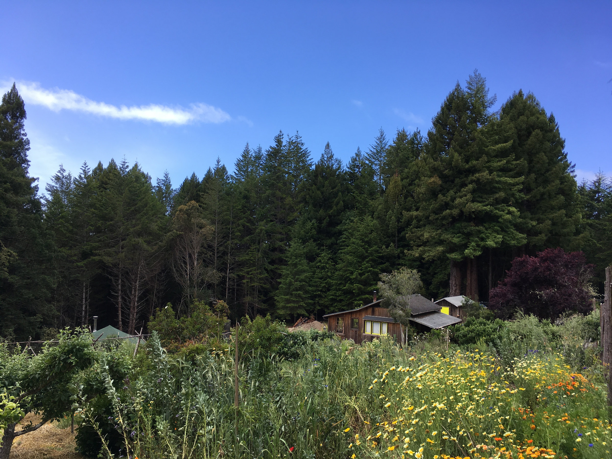 View of Orchard Cabin, Salmon Creek Farm, June 2018.