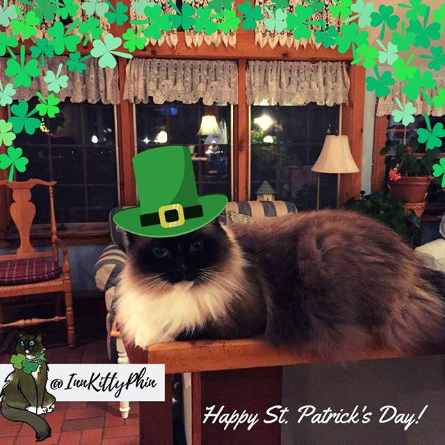 Hey Everyone!!! #InnkIttyPhin here wanting to wish everyone a safe and happy #StPatricksDay !!! ⠀ ⠀ Phin is clearly rocking it out in his Saint Patty's day hat ... super cute :3 ⠀ ☘☘☘☘☘⠀ ⠀ @cohoinnvermont #innkitty #innkittyphin #cohoinnvermont #cohoinn #patricksday #saintpatricksday #saintpattiesday #saintpattysday #stpatricksday #saintpatricksday #patricksday #shamrock #luck #luckoftheirish #clover #4leafclover #3leafclover