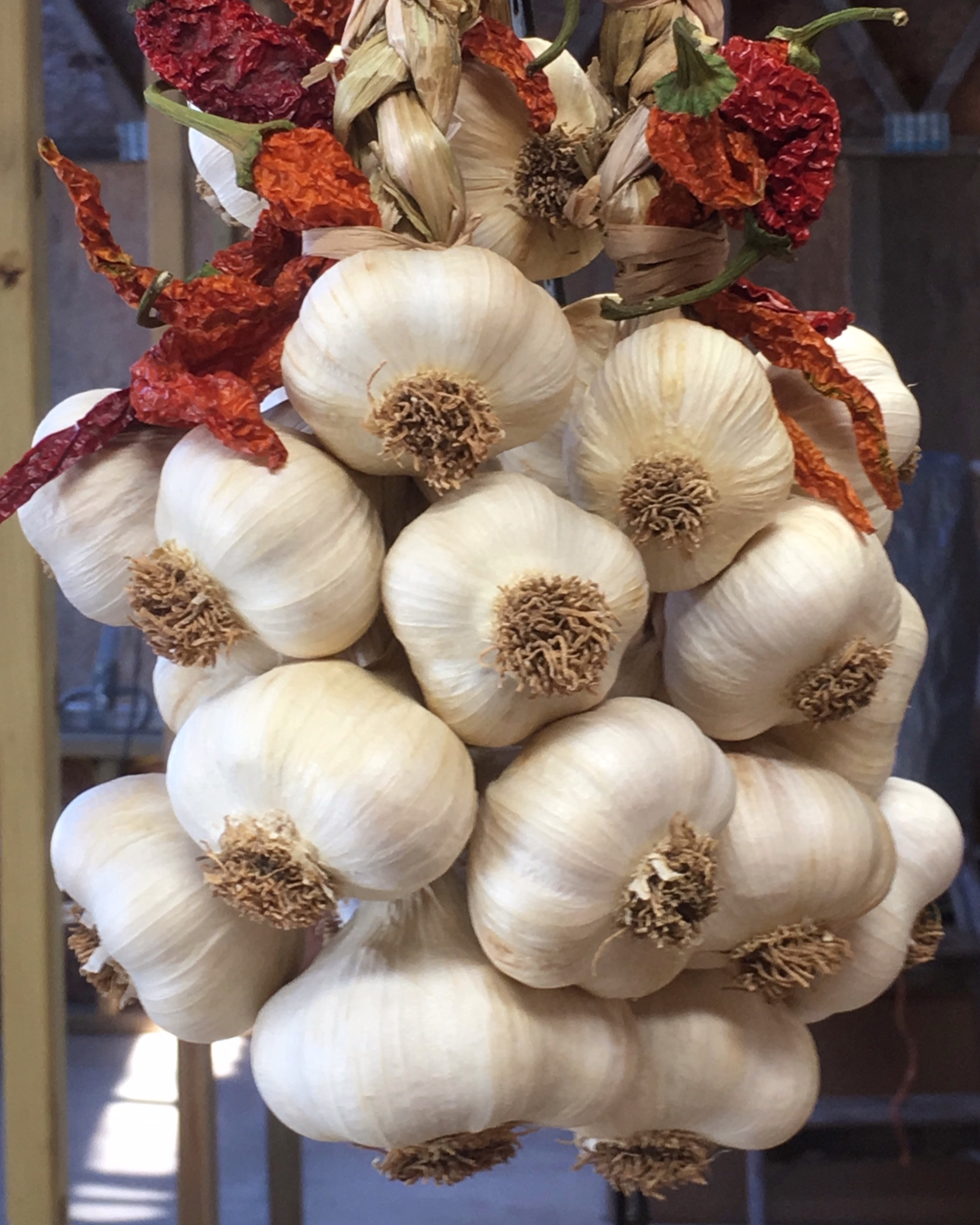- Since 2015, we've sold our garlic at local farmers' markets. Our customers have come to include restaurants, co-ops and folks in other states. We offer 8 to 12 different varieties of organically grown garlic each year. Our goal is to provide our customers with healthy, great tasting garlic varieties that enhance their family recipes.The response to our efforts has been awesome. So much so, we began offering a monthly garlic only CSA in 2017. In addition to cured garlic bulbs and based on the growth cycle, we also offer green garlic, garlic scapes, braids, dehydrated garlic chips and powder.