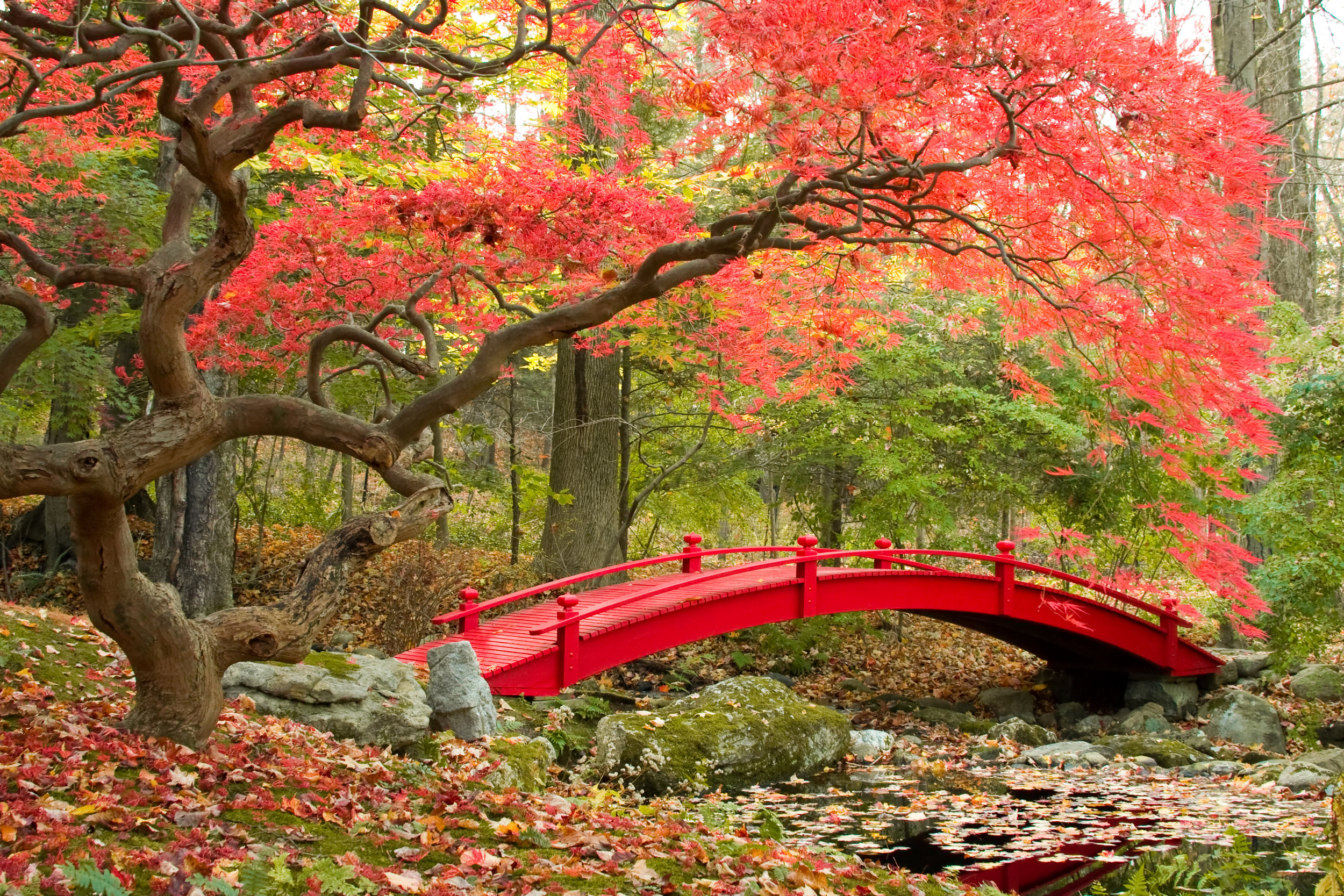 Japanese-Garden-185845821_3456x2304.jpeg