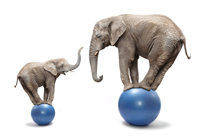 balancing elephants.jpg