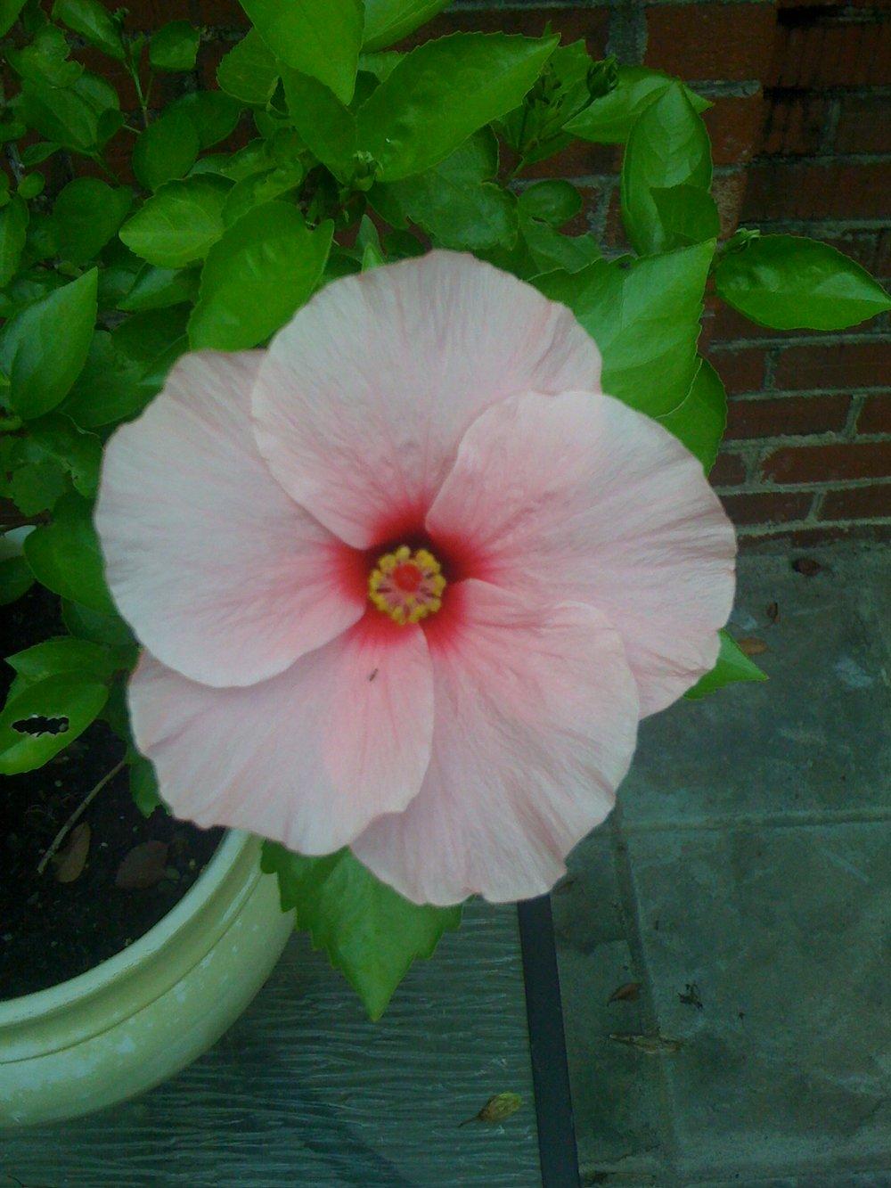 pink+flower.jpeg