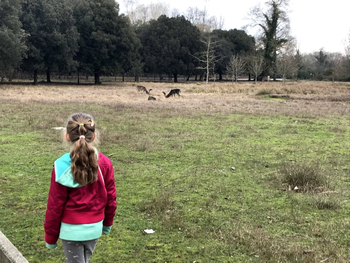 My oldest daughter quietly watching some deer at San Rossore Park