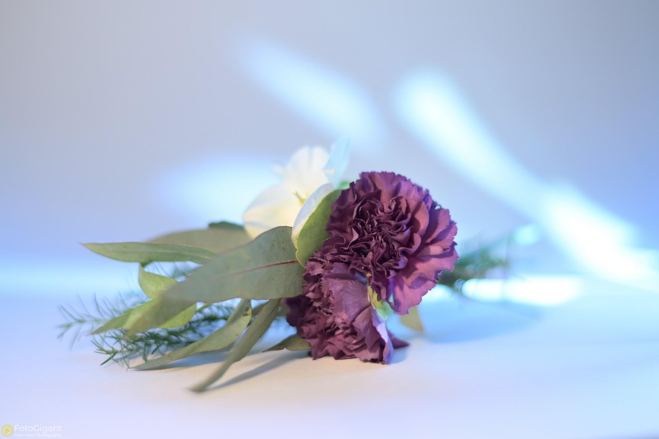 Flower-Photography_5.jpg