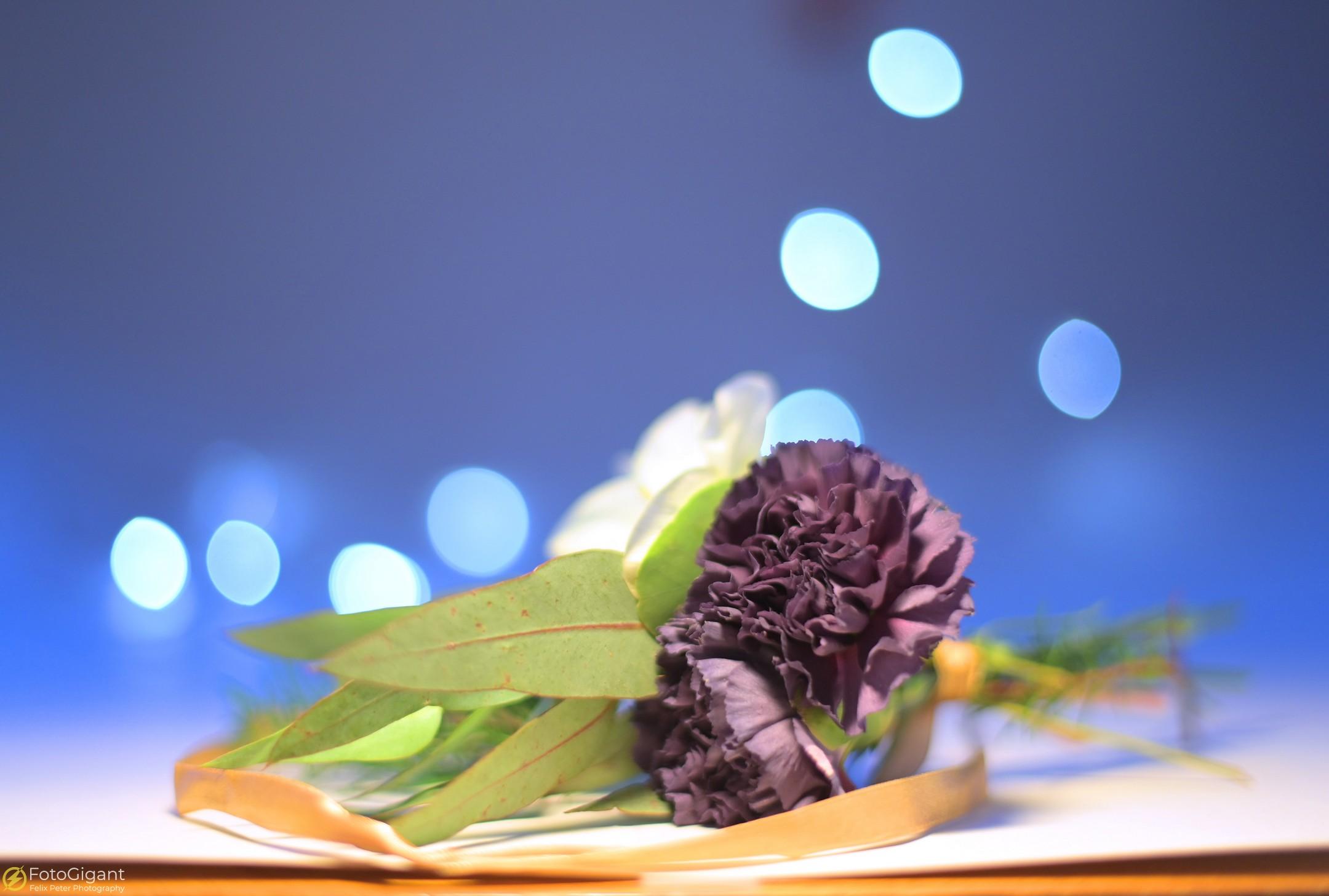 Flower-Photography_6.jpg