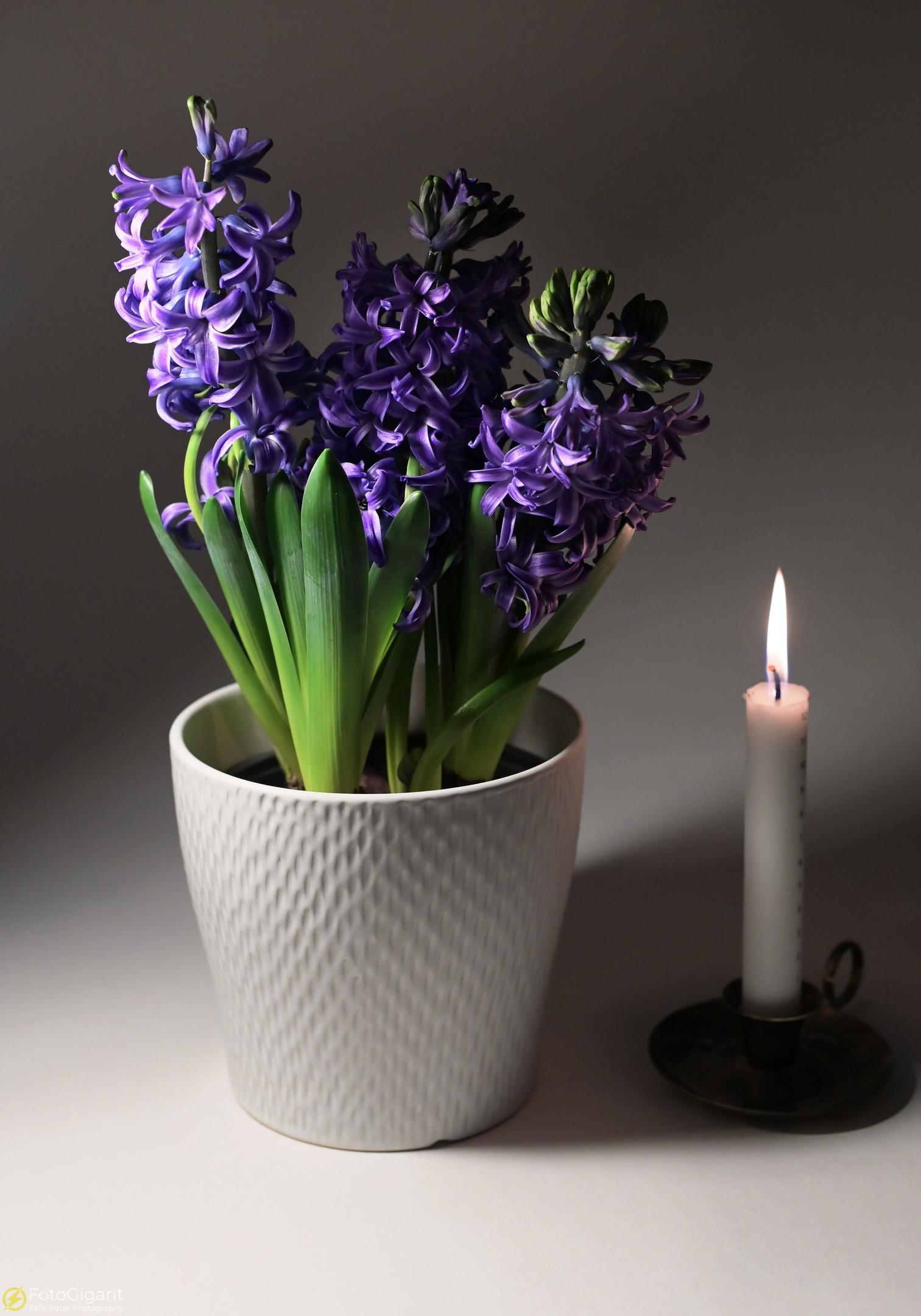 Flower-Photography_9.jpg