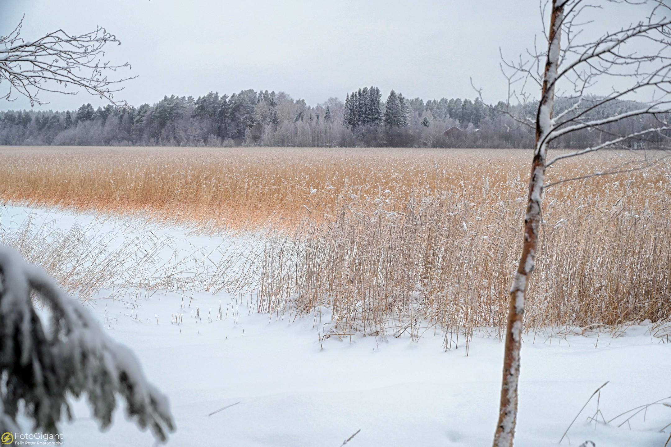 Finland-Photography_02.jpg