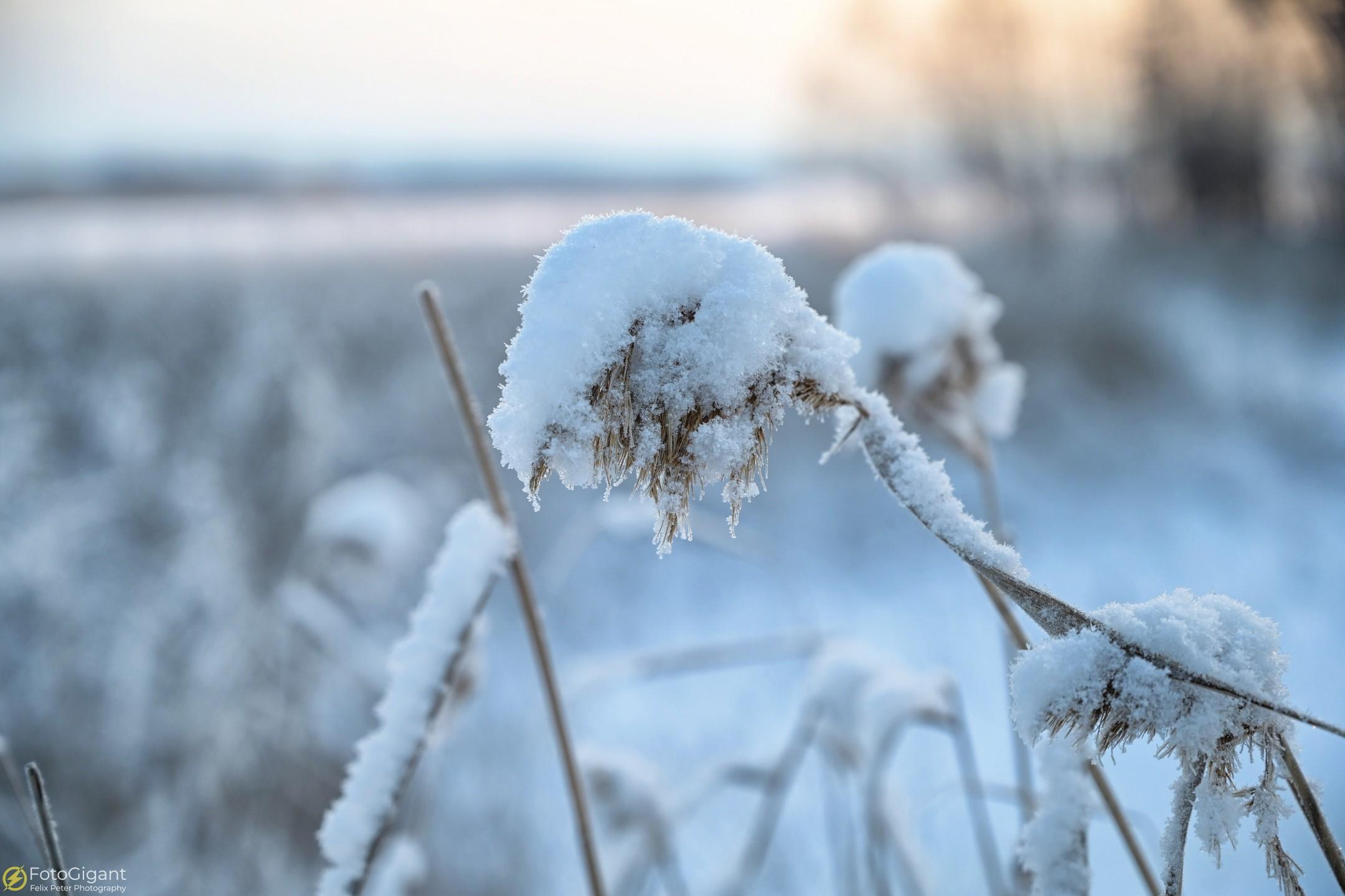 Finland-Photography_13.jpg