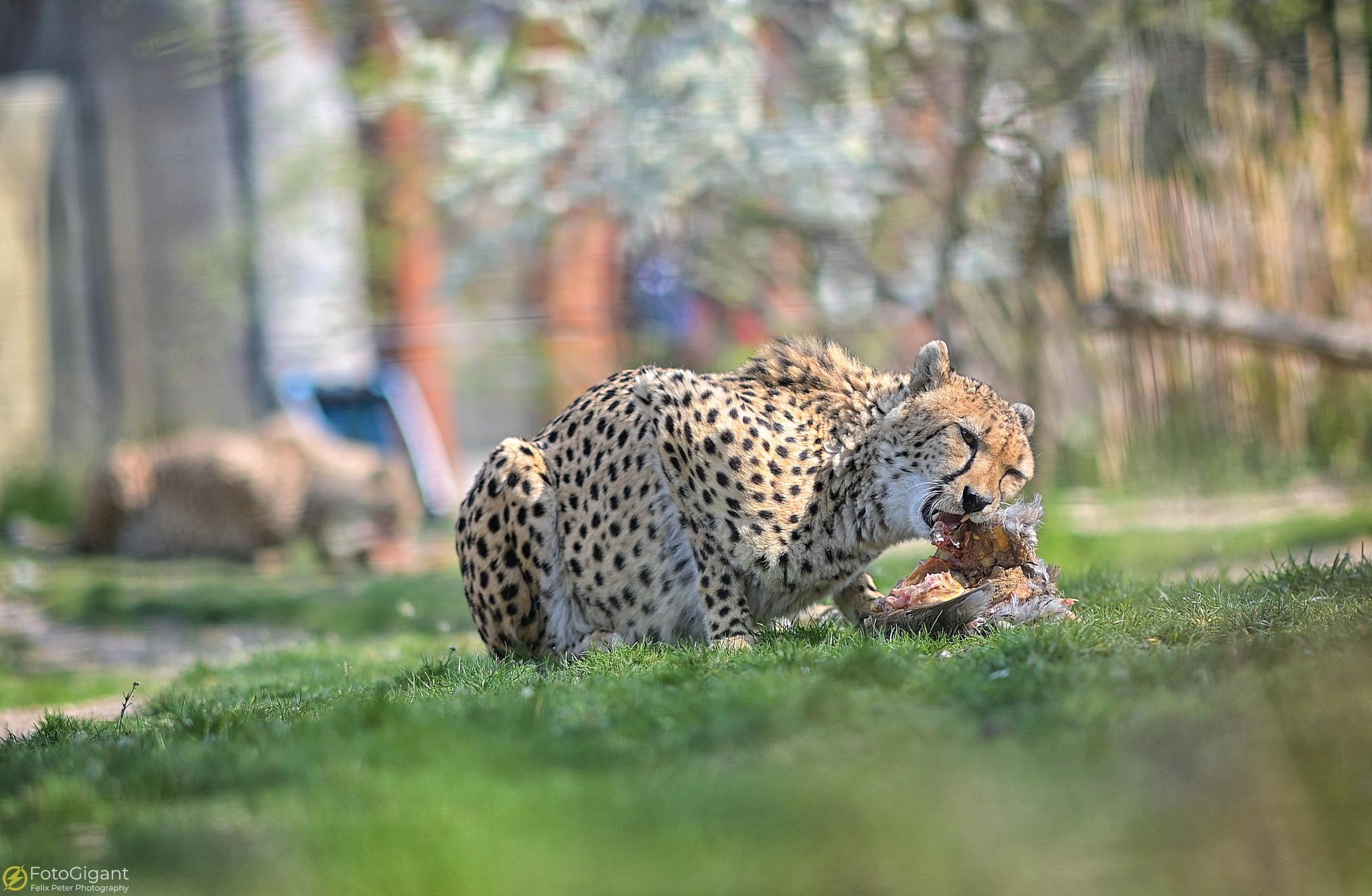 Tierfotografie_Zoo-Basel_10.jpg