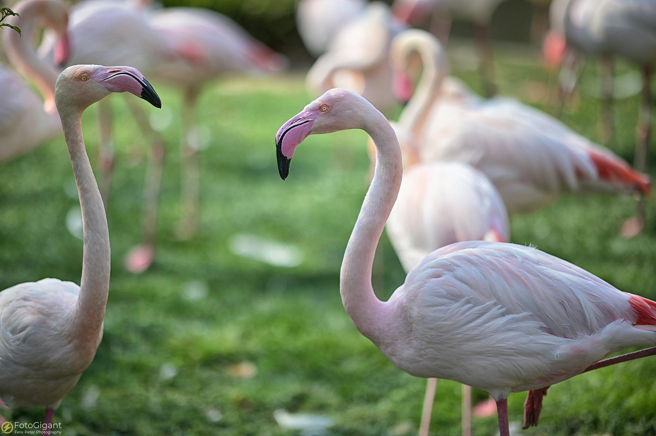 Tierfotografie_Zoo-Basel_11.jpg