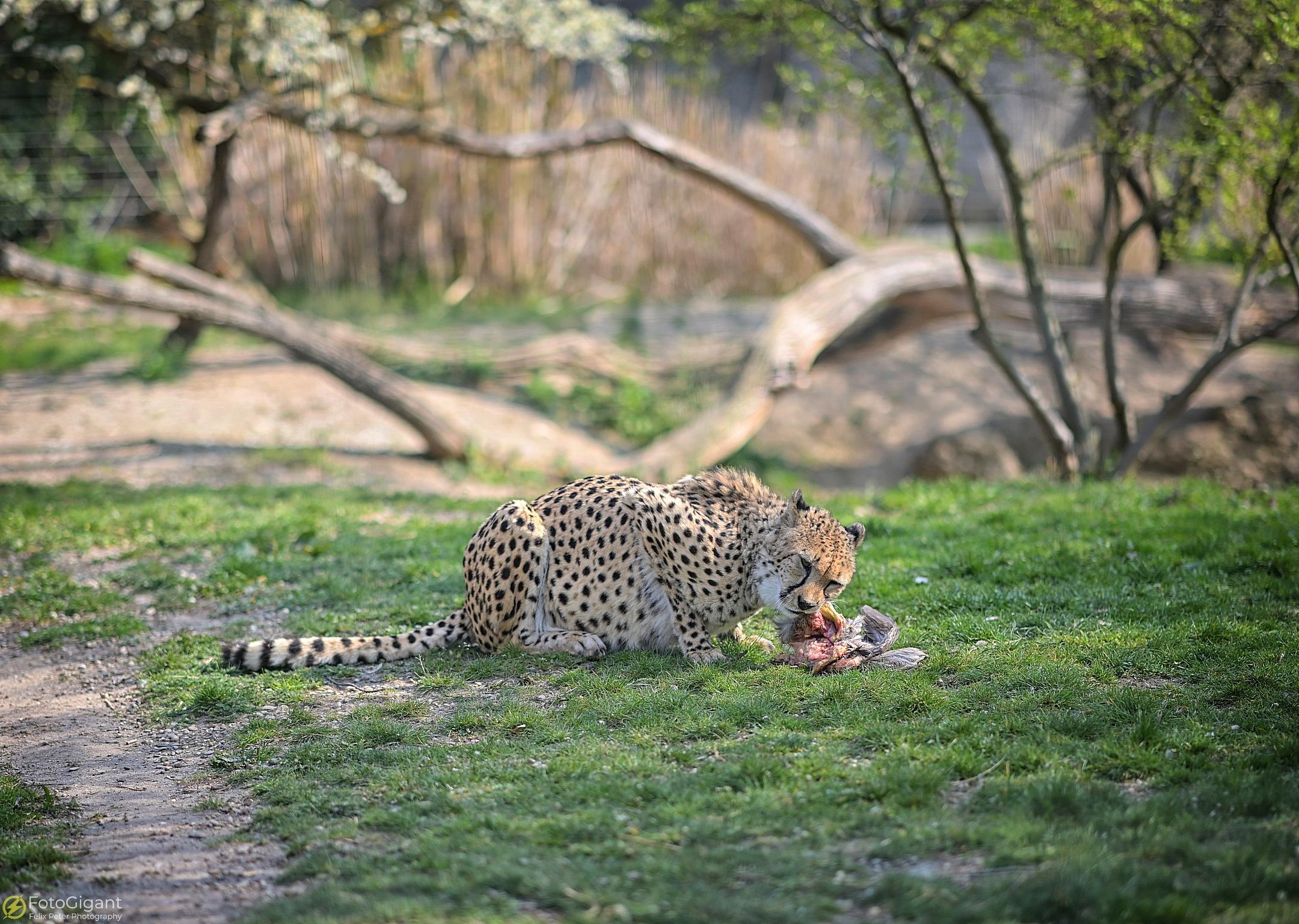 Tierfotografie_Zoo-Basel_12.jpg