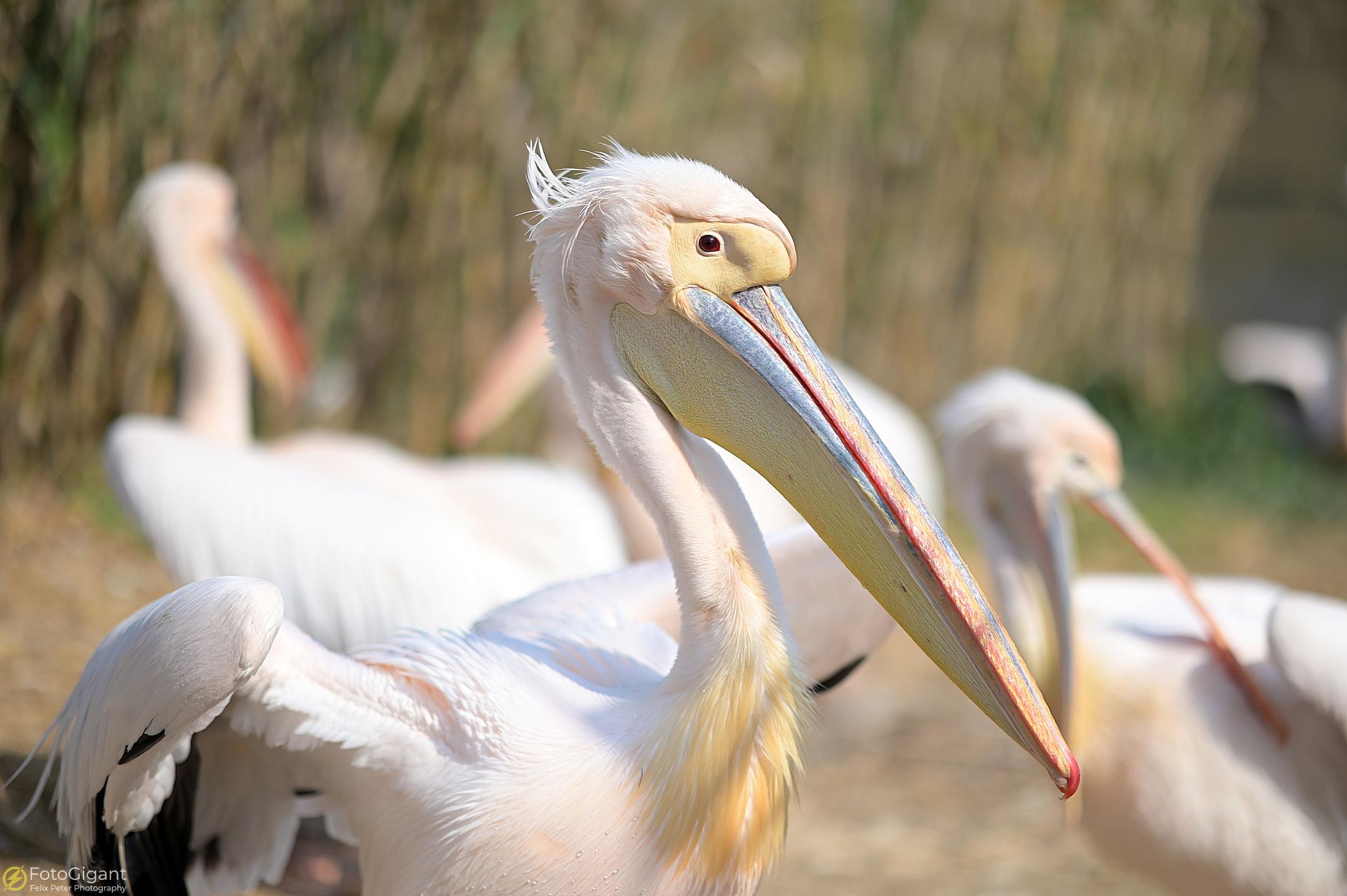 Tierfotografie_Zoo-Basel_14.jpg