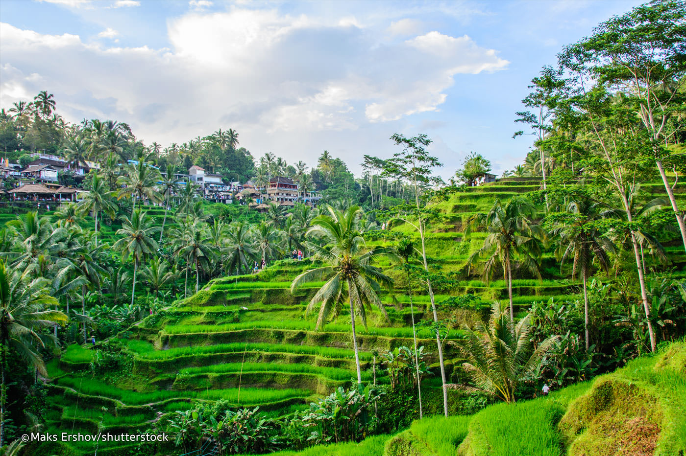Risfält i Ubud