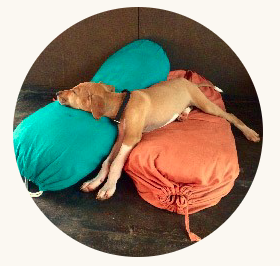 På Ashiyana bor fem hundar som gärna visar hur det ska gå till :)