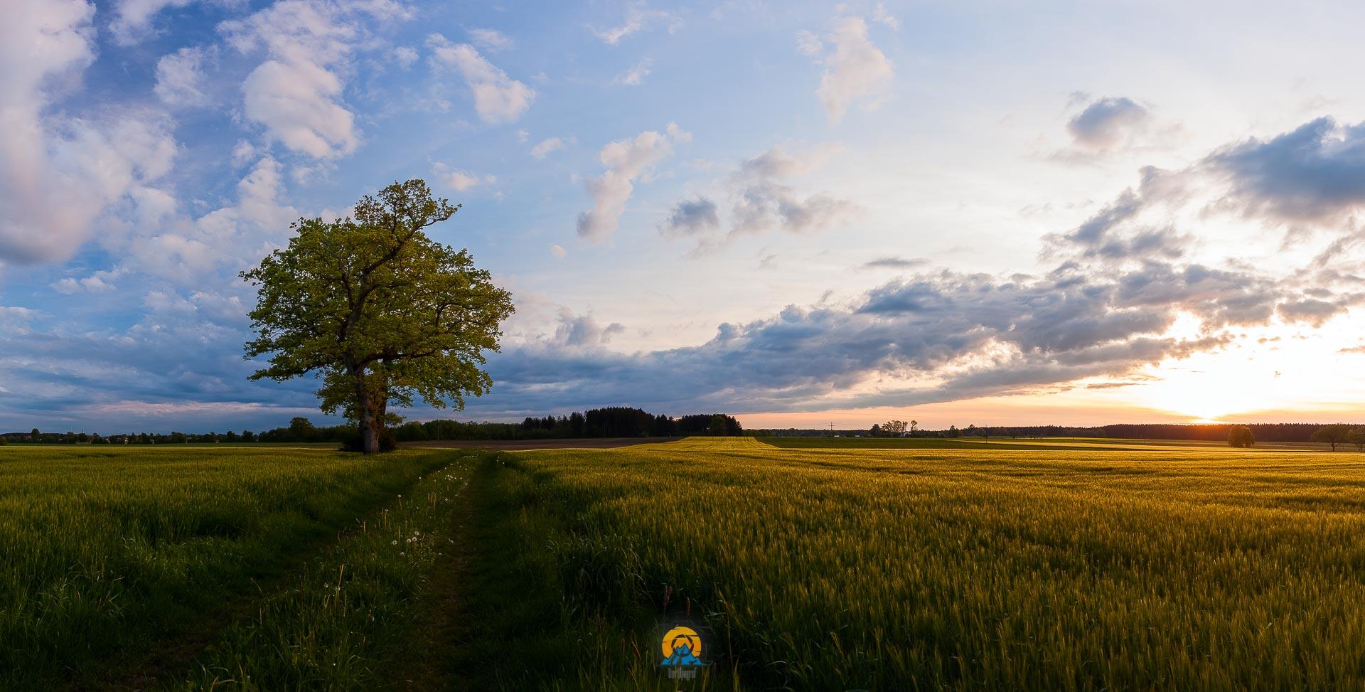 Der Baum am Feld