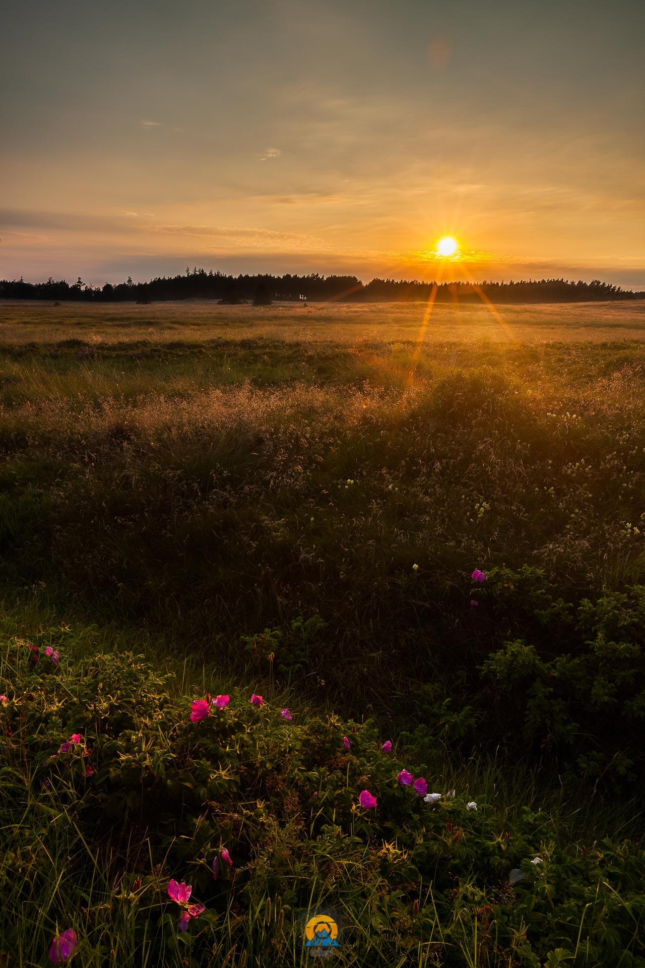 Dänemark Sonnenuntergang Neben Straße.jpg