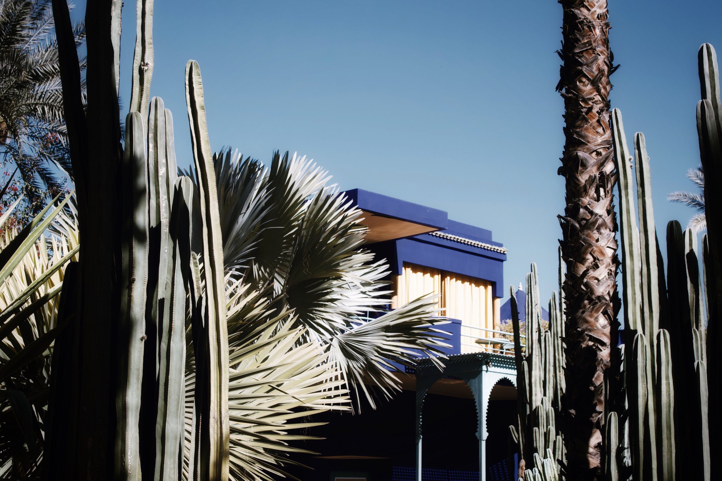 jardin majorelle marrakech-1.jpg