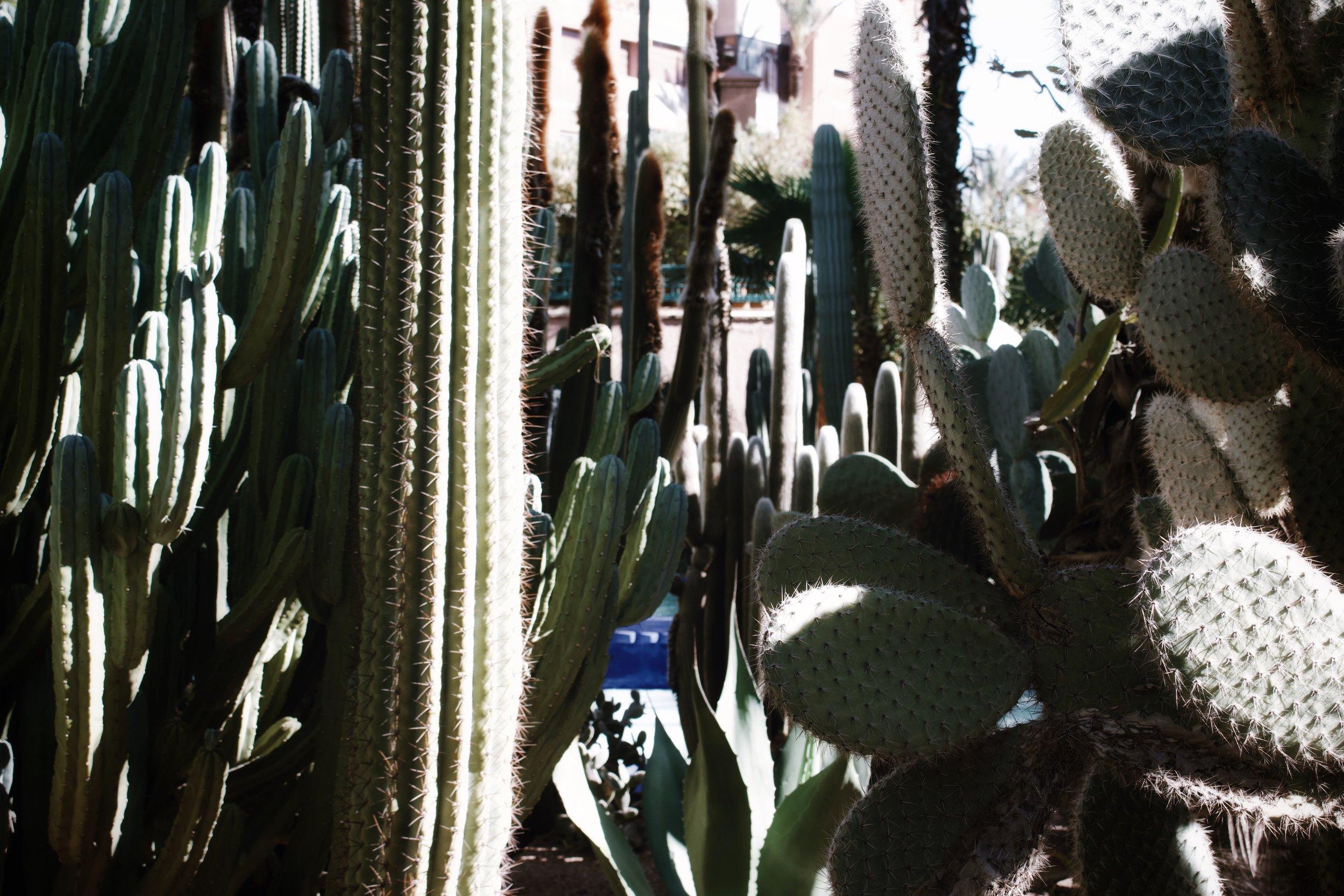 jardin majorelle marrakech-2.jpg