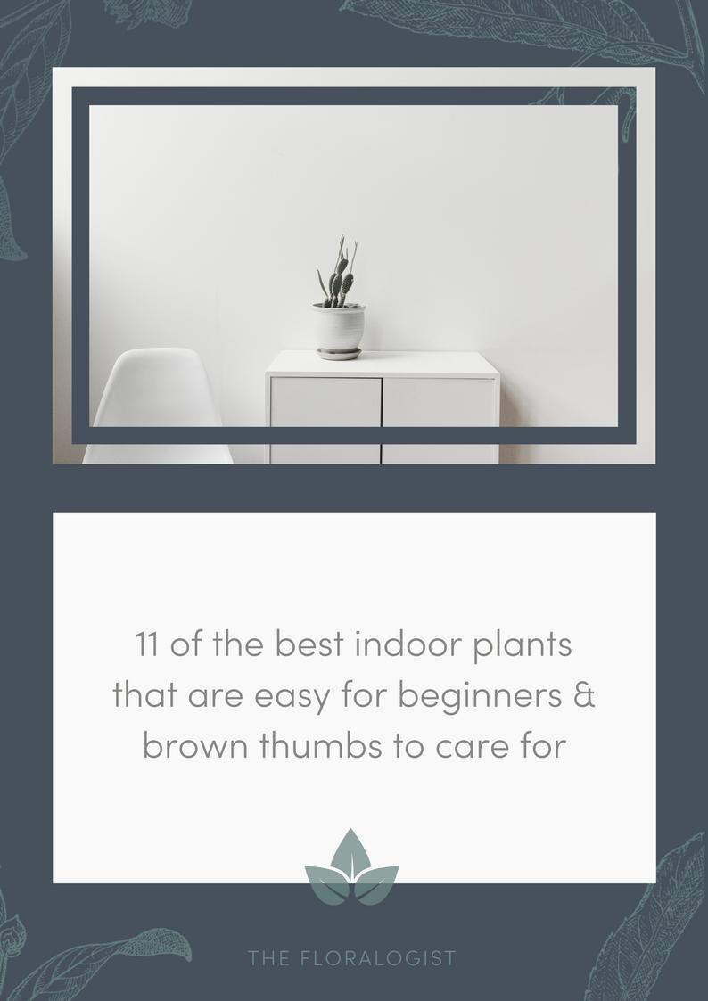 11 of the best indoor plants.png