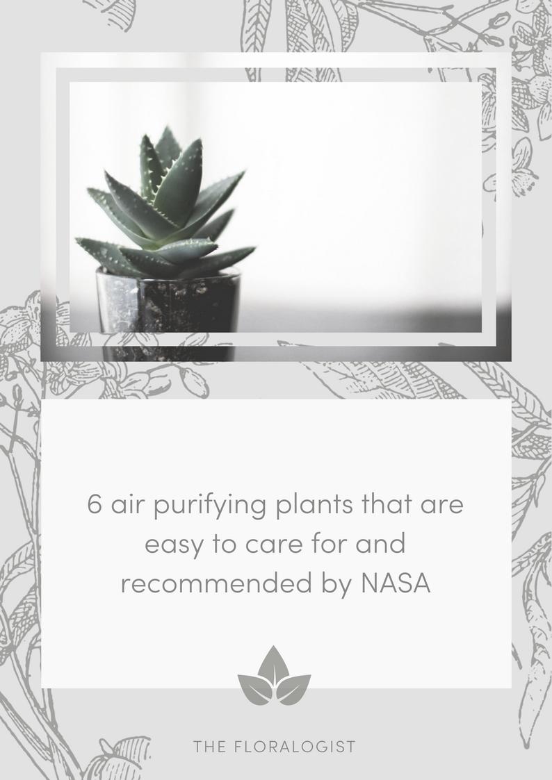 Aloe Vera air purifying plant.png