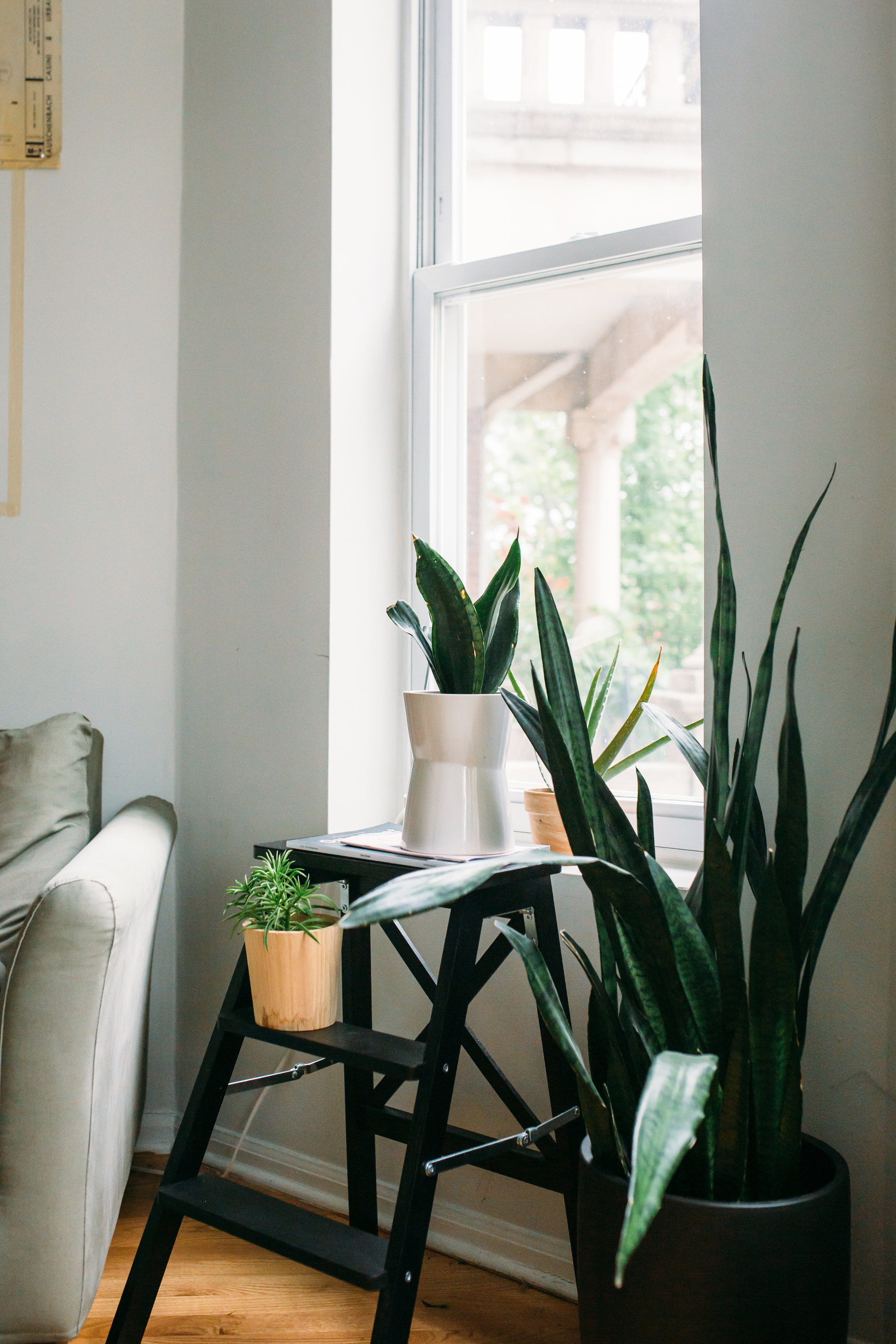 Simplify your indoor plant care routine - Consider your lifestyle and a plant's basic needs so you know what type of routine you can commit to.