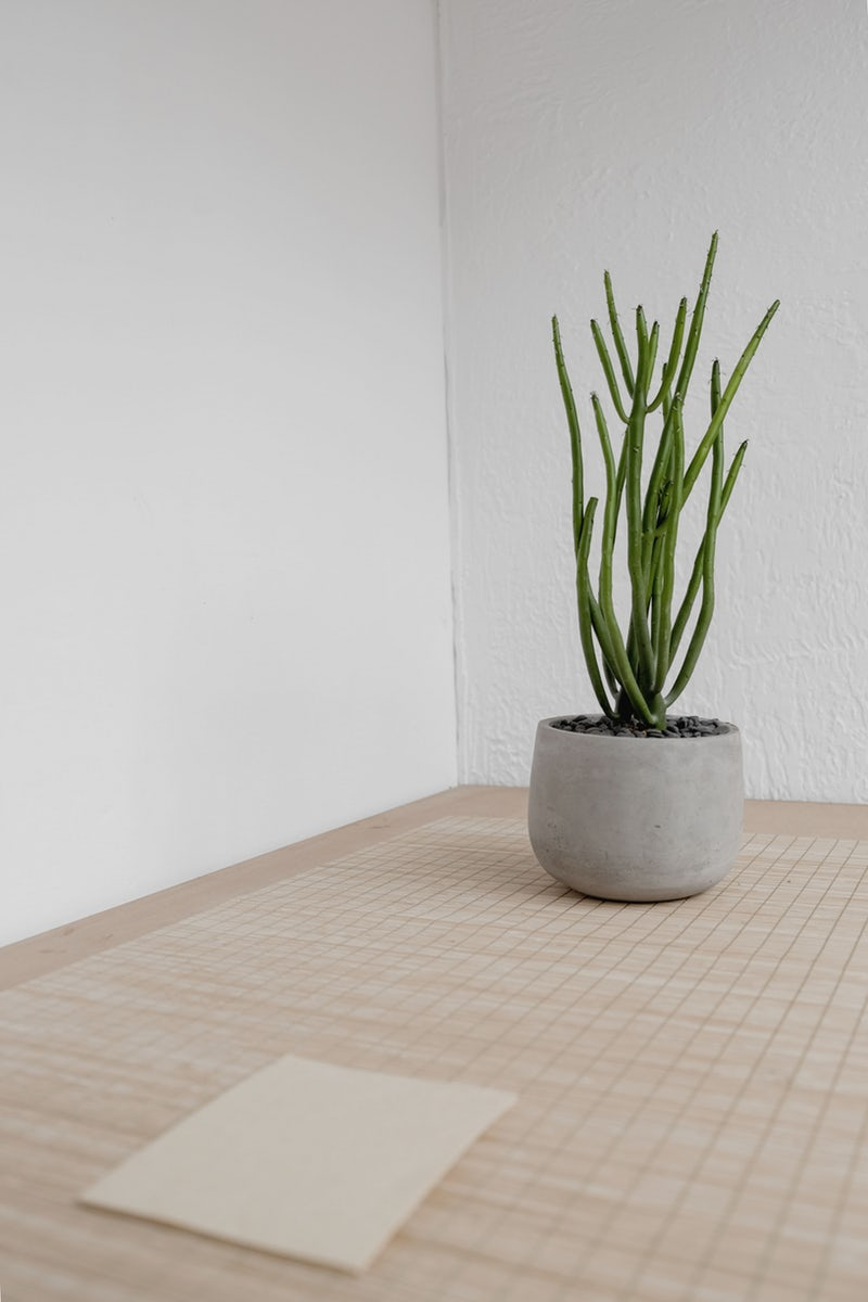 Be mindful of toxic indoor plants - Though it shouldn't deter you from owning houseplants, you should keep in mind that even common varieties may be toxic.