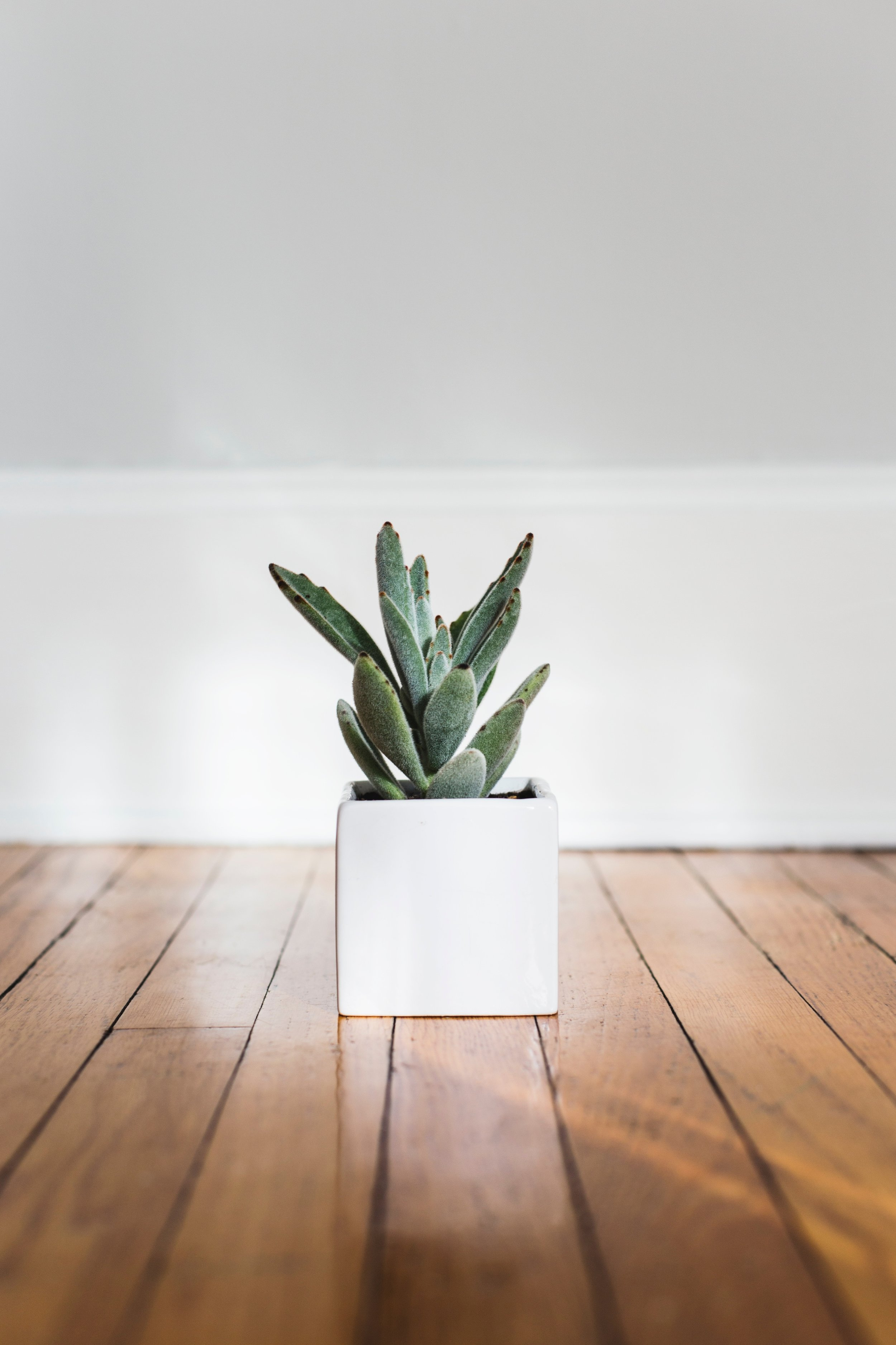Do you believe these indoor plant care myths? - Here are a few mistaken assumptions about houseplant care I've picked up along the way.