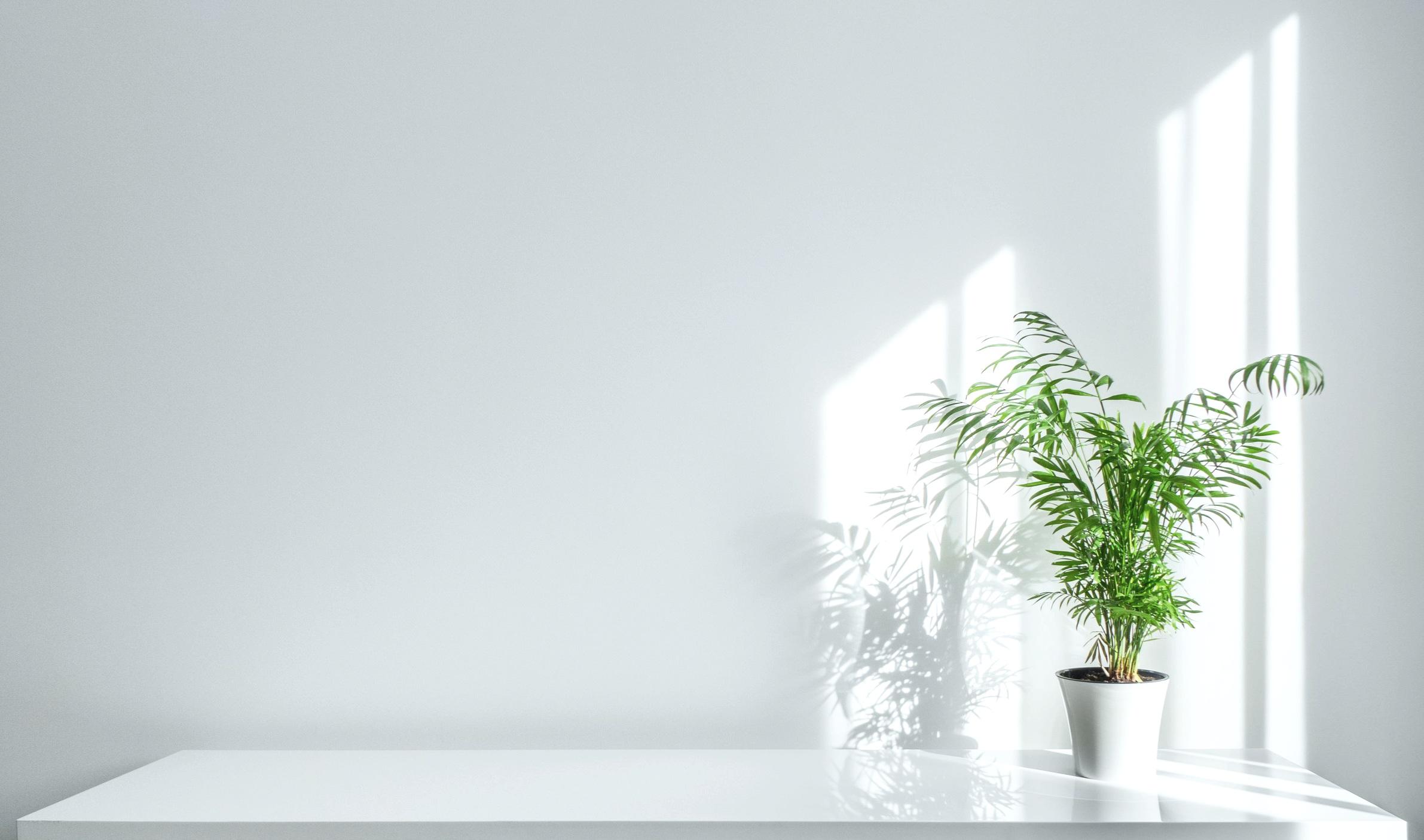 parlor+palm.jpg