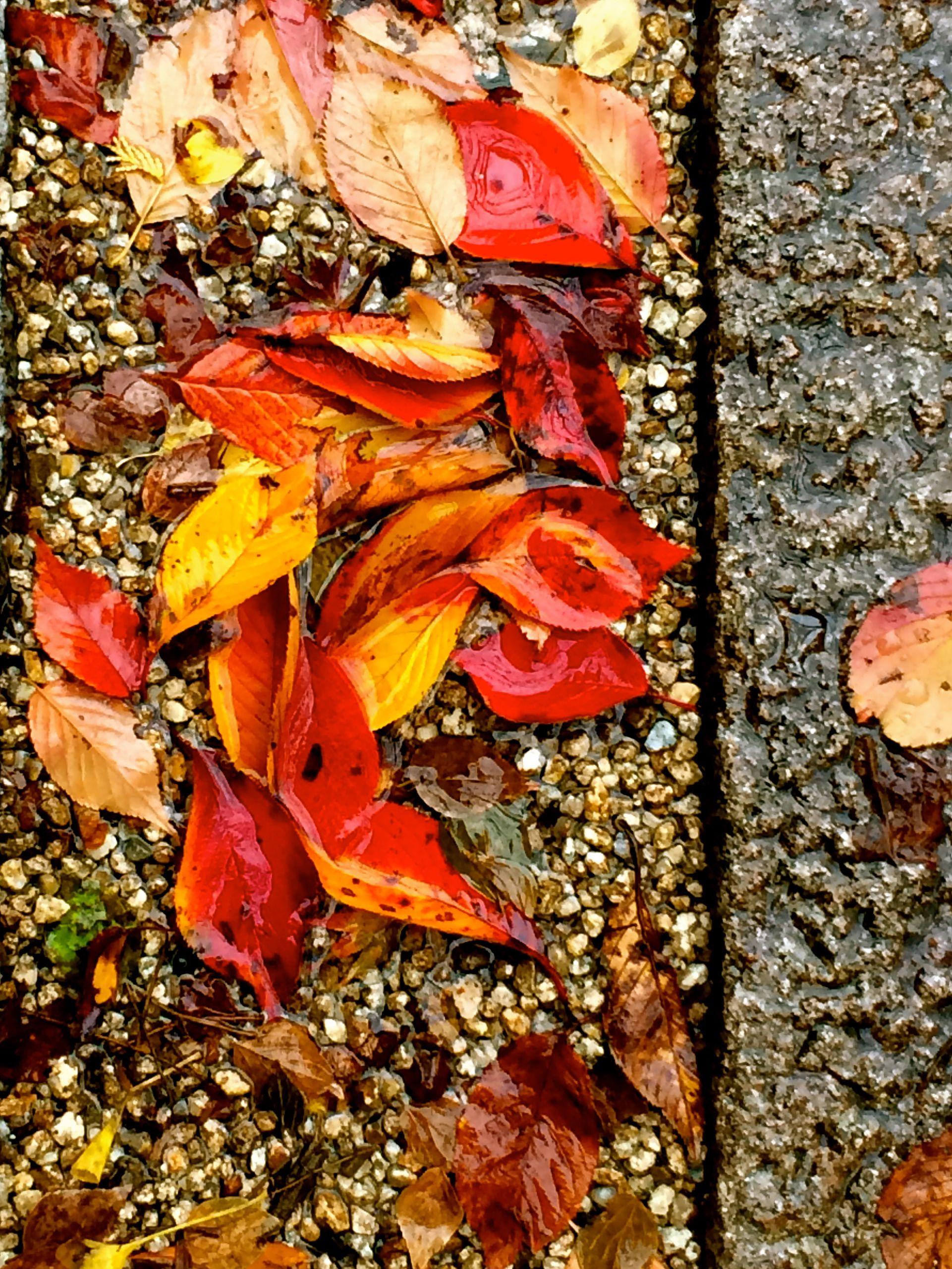 autumn2014_js1.jpg