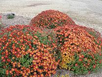 gardenOctober-tip-tmb.jpg