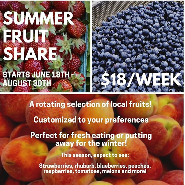 Want more local fruit in your life? We can help you with that! Sourced from local farms such as @mainegrownpeaches and @afterthefallfarm with sustainable growing practices, this share is great for folks who love eating fresh fruit, or who want to can some for the winter. Link in our bio. Starts in June! #mainefood #communitysupportedagriculture  #localfruits