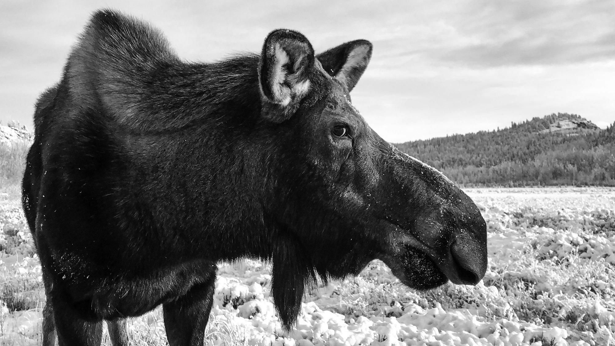 Yukon Wildlife Preserve, Whitehorse